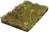 Covergreen kant-en-klare Sedum plantenmat