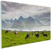 FotoCadeau.nl - Koeien met bergen Glas 90x60 cm - Foto print op Glas (Plexiglas wanddecoratie)