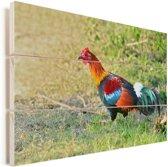 Een kleurrijke Bankivahoen is op zoek naar voedsel Vurenhout met planken 80x60 cm - Foto print op Hout (Wanddecoratie)
