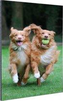 Twee honden spelen met bal Aluminium 20x30 cm - Foto print op Aluminium (metaal wanddecoratie)