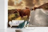 Fotobehang vinyl - Schotse hooglanders op een rustige weg breedte 450 cm x hoogte 300 cm - Foto print op behang (in 7 formaten beschikbaar)