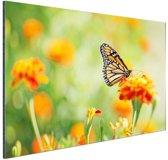 Monarchvlinder op bloem Aluminium 60x40 cm - Foto print op Aluminium (metaal wanddecoratie)