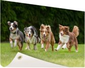 4 rennende honden op een rij Tuinposter 120x80 cm - Tuindoek / Buitencanvas / Schilderijen voor buiten (tuin decoratie)