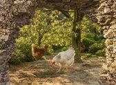 Tuindoek doorkijk kippen in bos