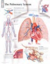 Pulmonary System Laminated Poster
