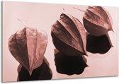 Schilderij | Canvas Schilderij Bloem | Rood, Bruin | 120x70cm 1Luik | Foto print op Canvas