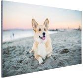 Hond op het strand Aluminium 60x40 cm - Foto print op Aluminium (metaal wanddecoratie)