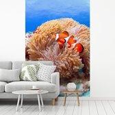 Fotobehang vinyl - Zijaanzicht van een clown vis zwemmend voor een anemoon bij de Kerama-eilanden breedte 190 cm x hoogte 280 cm - Foto print op behang (in 7 formaten beschikbaar)