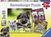 Ravensburger Honden en Katten - Drie puzzels van 49 stukjes