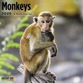 Monkeys Kalender 2020