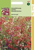 Hortitops Zaden - Clarkia Elegans Dubbelbloemig Gemengd