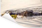 Krokodil zwemt in de rivieren van het Nationaal park Kakadu in Australië Tuinposter 180x120 cm - Tuindoek / Buitencanvas / Schilderijen voor buiten (tuin decoratie) XXL / Groot formaat!