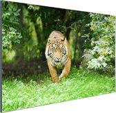 Close-up van een Sumatraanse tijger Aluminium 90x60 cm - Foto print op Aluminium (metaal wanddecoratie)