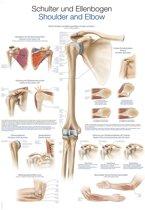 Het menselijk lichaam - anatomie poster schouder en elleboog (Duits/Engels/Latijn, papier, 50x70 cm)  + ophangsysteem