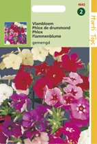 Hortitops Zaden - Phlox Drummondii Grootbloemig Kleurenmengsel