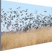 Groep ganzen Aluminium 120x80 cm - Foto print op Aluminium (metaal wanddecoratie)
