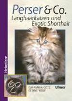 Perser und Co. Langhaarkatzen und Exotic Shorthair
