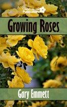 Growing Roses