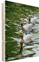 Drie zwemmende Indische ganzen Vurenhout met planken 40x60 cm - Foto print op Hout (Wanddecoratie)