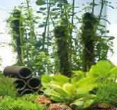 Hoepro vijver planten assortiment small