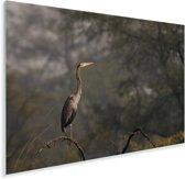 Purperreiger op een tak in het bos Plexiglas 90x60 cm - Foto print op Glas (Plexiglas wanddecoratie)