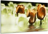 Glasschilderij Tulpen   Bruin, Groen   120x70cm 1Luik   Foto print op Glas    F002924