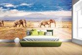Drie overstekende olifanten Fotobehang 380x265