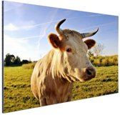 Koe in de natuur Aluminium 90x60 cm - Foto print op Aluminium (metaal wanddecoratie)