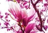 Fotobehang Magnolia Tree | XXL - 312cm x 219cm | 130g/m2 Vlies