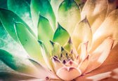 Fotobehang Nature Plant Green Pink | XXXL - 416cm x 254cm | 130g/m2 Vlies