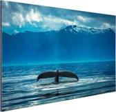 Staart van een grote bultrug walvis Aluminium 90x60 cm - Foto print op Aluminium (metaal wanddecoratie)