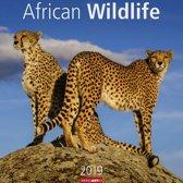 African Wildlife 2019