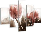 Glasschilderij Tulp | Bruin, Grijs | 100x70cm 5Luik | Foto print op Glas |  F005053