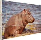 Baby nijlpaard Hout 160x120 cm - Foto print op Hout (Wanddecoratie) XXL / Groot formaat!