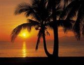 Zonsondergang palmboom  - Fotobehang 368 x 254 cm