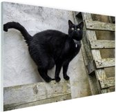 Huiskat staat op een houten plank Glas 180x120cm - XXL / Grote Poster - Wanddecoratie cm - Foto print op Glas (Plexiglas wanddecoratie) cm - Foto print op Poster (wanddecoratie) / Dieren Poster