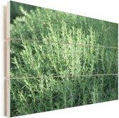 Een groep wilde rozemarijn twijgen Vurenhout met planken 90x60 cm - Foto print op Hout (Wanddecoratie)
