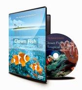 Clownvissen van de Tropische Ocean
