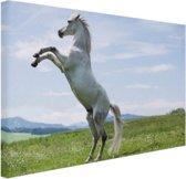 Wit paard steigert Canvas 30x20 cm - klein - Foto print op Canvas schilderij (Wanddecoratie woonkamer / slaapkamer) / Dieren Canvas Schilderijen