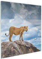 Leeuwin op rots Glas 60x90 cm - Foto print op Glas (Plexiglas wanddecoratie)