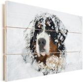 Besneeuwde Berner Sennenhond Vurenhout met planken 60x40 cm - Foto print op Hout (Wanddecoratie)