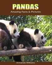 Pandas: Amazing Facts & Pictures