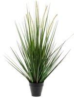 Emerald - Gras plant - In plastic pot - 90 cm - groen