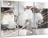 Glas schilderij Orchidee, Bloemen | Grijs, Wit | 120x80cm 3Luik | Foto print op Glas |  F007833