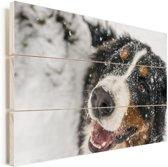 Een Berner Sennenhond onder het sneeuw Vurenhout met planken 90x60 cm - Foto print op Hout (Wanddecoratie)