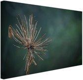 Droge bloem  Canvas 80x60 cm - Foto print op Canvas schilderij (Wanddecoratie)