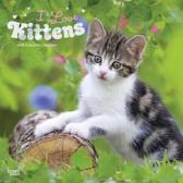 Kittens I Love Kalender 2019