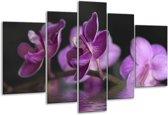 Glasschilderij Orchidee   Paars, Zwart   170x100cm 5Luik   Foto print op Glas    F001231