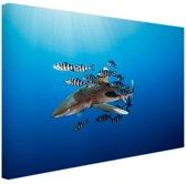 Haai met vissen Canvas 180x120 cm - Foto print op Canvas schilderij (Wanddecoratie woonkamer / slaapkamer) / Dieren Canvas Schilderijen XXL / Groot formaat!