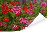 Geranium bloemen in de tuin Poster 180x120 cm - Foto print op Poster (wanddecoratie woonkamer / slaapkamer) XXL / Groot formaat!
